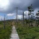 Procházíme uschlým lesem