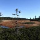 Černohorské rašeliniště v barvách podzimu