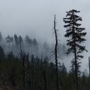 Z hlubin inverze tajemně vystupuje les