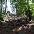 Spletí kořenů k vrcholu Devět skal