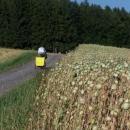 Nad Studeným rostlo makové pole...