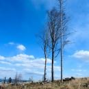Opodál rostou tři stromy